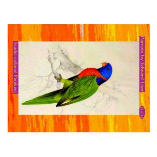 Carte Postale Edward Lear. Parakeet. Écarlate-colleté