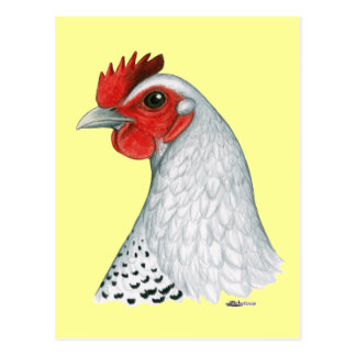 Carte Postale Egyptien Fayoumi :  Poule argentée