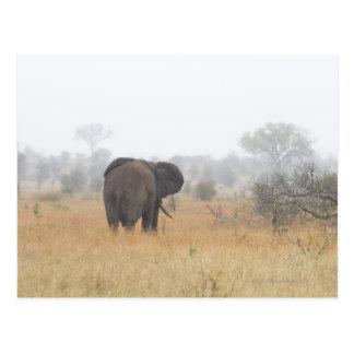 Carte Postale Éléphant en brouillard de début de la matinée,