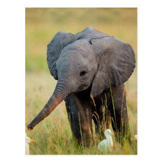 Carte Postale Éléphant et oiseaux de bébé