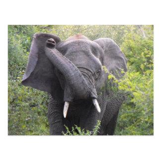 Carte Postale Éléphant fâché
