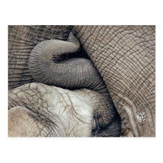 Carte Postale Éléphant mignon de bébé de soins allaité par la