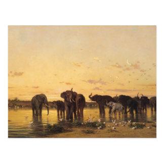 Carte Postale Éléphants africains