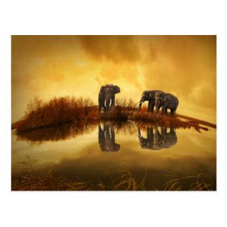 Carte Postale Éléphants asiatiques en Thaïlande sous un coucher