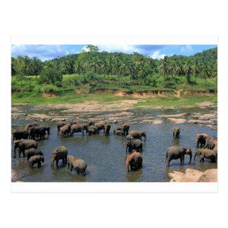 Carte Postale Éléphants Sri Lanka