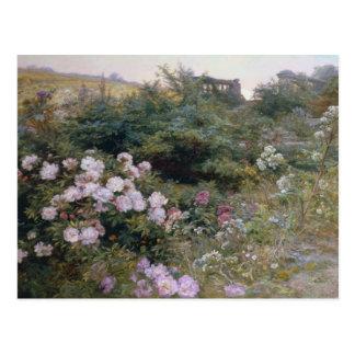 Carte Postale En pleine floraison