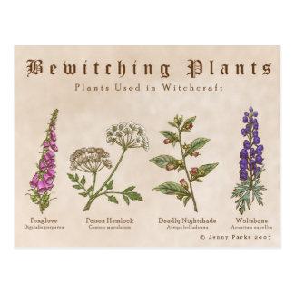 Carte postale enchantante de plantes