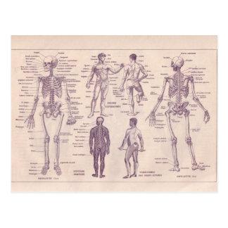Carte Postale Encyclopédie française 1920, anatomie humaine