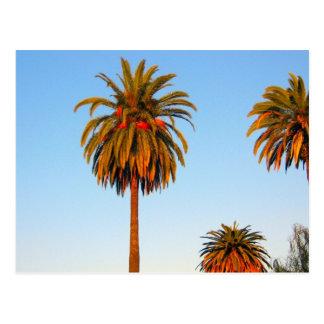 Carte postale ensoleillée de palmiers de la