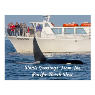 Carte Postale Épaulard d'orque - transiteur, Washington