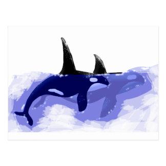 Carte Postale Épaulards d'orques