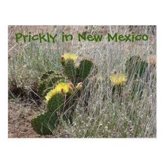 Carte Postale Épineux au Nouveau Mexique