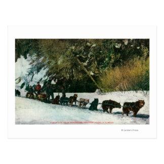 Carte Postale Équipe de chien du Yukon transportant par le