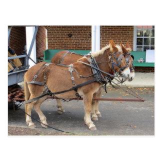 Carte Postale Équipe de mule, 1