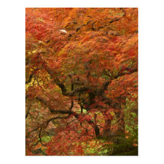 Carte Postale Érable japonais dans la couleur 4 de chute