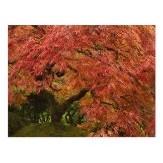 Carte Postale Érable japonais dans la couleur de chute