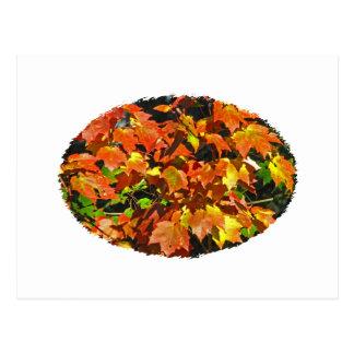 Carte Postale Érable rouge (automne)