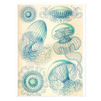 Carte Postale Ernst Haeckel | Leptomedusa | Thecate Hydroids