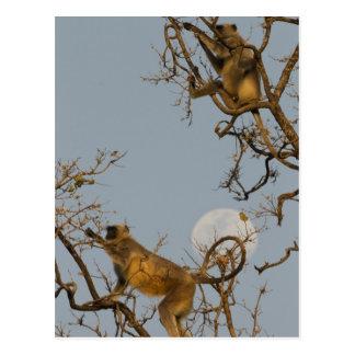 Carte Postale Escalade de Langur de Hanuman dans l'arbre