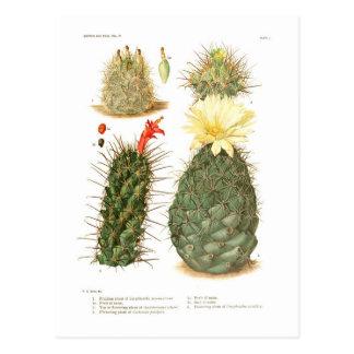 Carte Postale Espèces de cactus