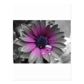 Carte Postale Et la couleur sait noir la plante très belle