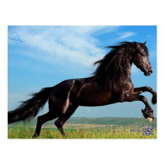 Carte Postale étalon noir et sauvage élevant le cheval