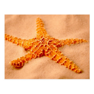 Carte Postale Étoiles de mer