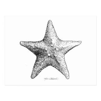 Carte Postale Étoiles de mer dessinant l'art d'étoile de mer