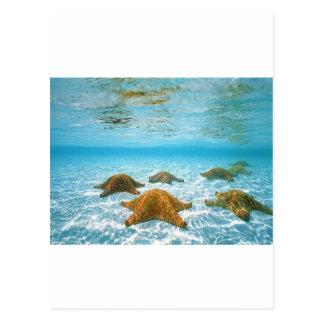 Carte Postale étoiles de mer island.jpg