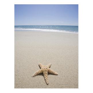 Carte Postale Étoiles de mer sur la plage par l'Océan Atlantique