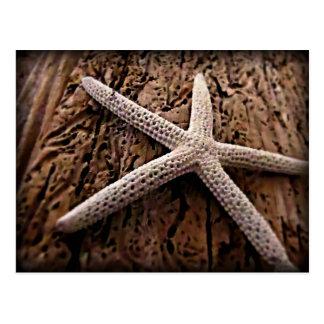 Carte Postale Étoiles de mer sur le bois de flottage