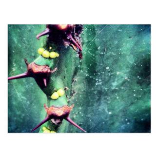Carte postale étrangère de cactus