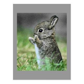 Carte Postale Étreinte de lapin d'amour