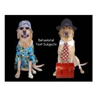 Carte Postale Étude de comportement d'animal/laboratoire/chien
