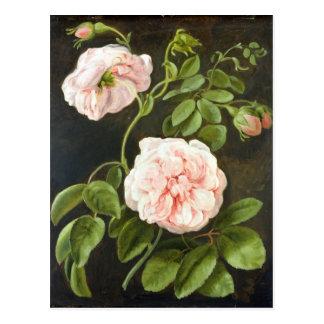 Carte Postale Étude de fleur