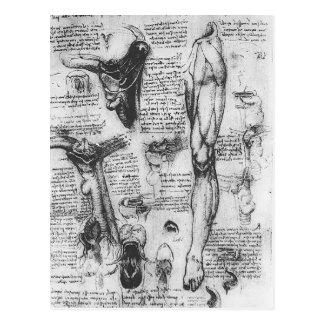 Carte Postale Études anatomiques de Leonardo Vinci- (larynx et