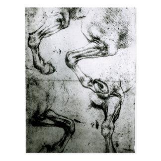 Carte Postale Études des jambes de chevaux