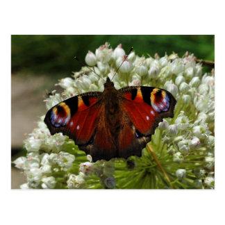 Carte postale européenne de papillon de chenille