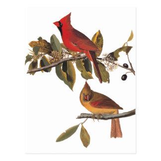 Carte Postale Ex-libris vintage d'oiseau d'Audubon de gros-bec