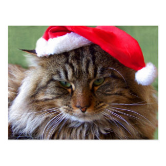 Carte postale excentrique de chat de Noël