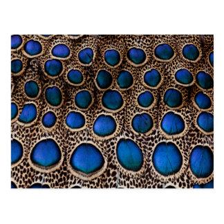 Carte Postale Faisan de paon repéré par bleu