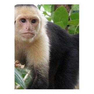 Carte postale faite face blanche de singe de