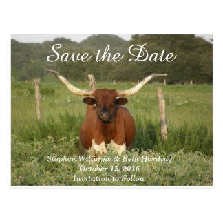 Carte Postale Faites gagner la date le Texas Longhorn