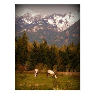 Carte Postale Faites un souhait sur un cheval blanc !