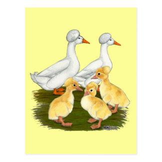 Carte Postale Famille crêtée de canard
