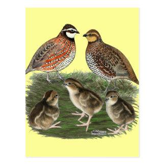 Carte Postale Famille de cailles