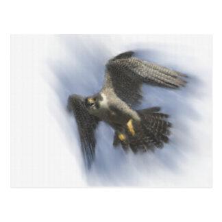 Carte Postale Faucon pérégrin en vol