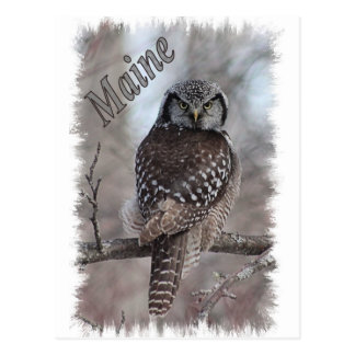 Carte Postale Faune du Maine - hibou de faucon du nord