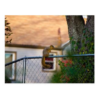 Carte Postale Fence-squirrel/écureuil à la clôture