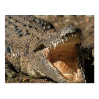 Carte Postale Ferme d'alligator